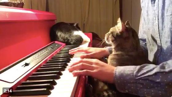 癒されるーー!!猫と一緒にピアノでどうぶつの森の「2:00AM」のBGMを弾いてみた!